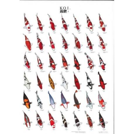 Poster de vari t s de carpes ko n 1 boutique bassin for Variete koi