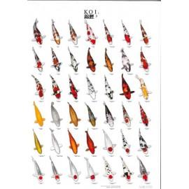 Poster de variétés de carpes Koï N°3