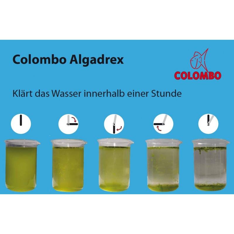 anti algues et eau verte algadrex de colombo boutique bassin. Black Bedroom Furniture Sets. Home Design Ideas