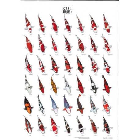 Poster de variétés de carpes Koï N°1