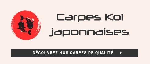 carpes.jpg